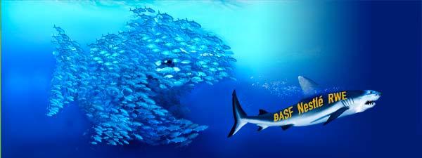 Fischschwarm_600x225-Fan-werden