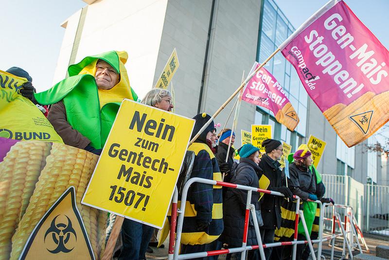 88 Prozent der Bürger/innen sind gegen eine Zulassung für den Gentech-Mais 1507