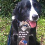 """Ein Hund, an dessen Halsband ein Türhänger hängt mit der Aufschrift """"Wählen Sie die Katze im Sack?"""""""