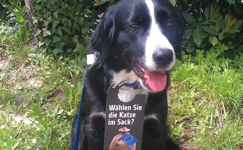 Hund als Aktionsassistentin