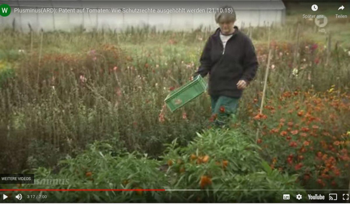 YouTube-Screenshot: Patent auf Lebensmittel: Tomatensorte, die vor Krebs schützt wird von Konzern patentiert.