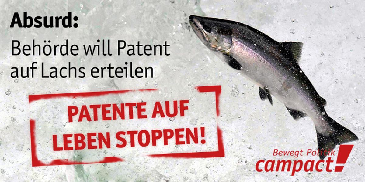 Absurd: Patent auf Lachse. Grafik: Sascha Collet/Campact