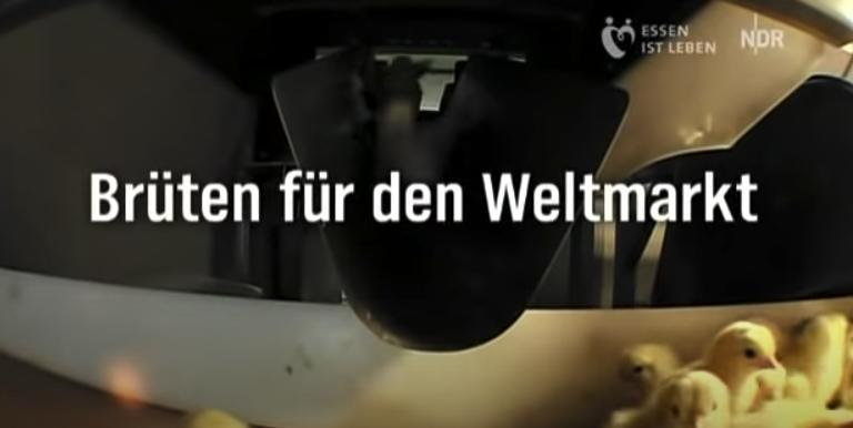 Screenshot vom NDR Video: Eier- und Geflügelindustrie: Dieses Video macht einen fassungslos