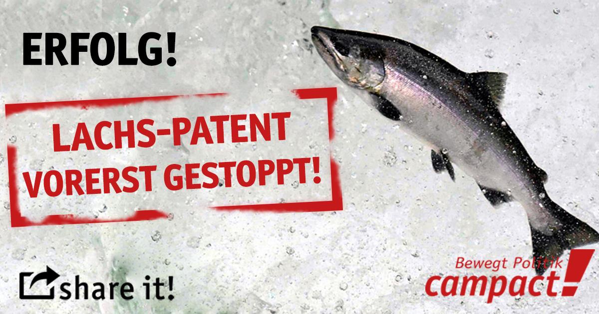 Erfolg: Das Patent auf Lachse ist vorerst gestoppt. Grafik: Sascha Collet/Campact