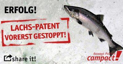 Lachs-Patent durch Bürgerprotest vorerst gestoppt. Grafik: Sascha Collet/Campact (CC)
