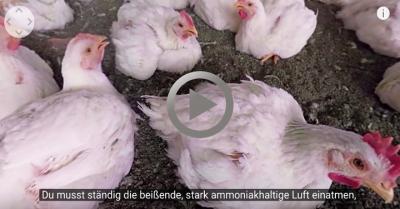 Screenshot: 360-Grad-Video aus den Augen eines Huhns in der Massentierhaltung. Video: Animal Equality, Sprecher: Christoph Maria Herbst