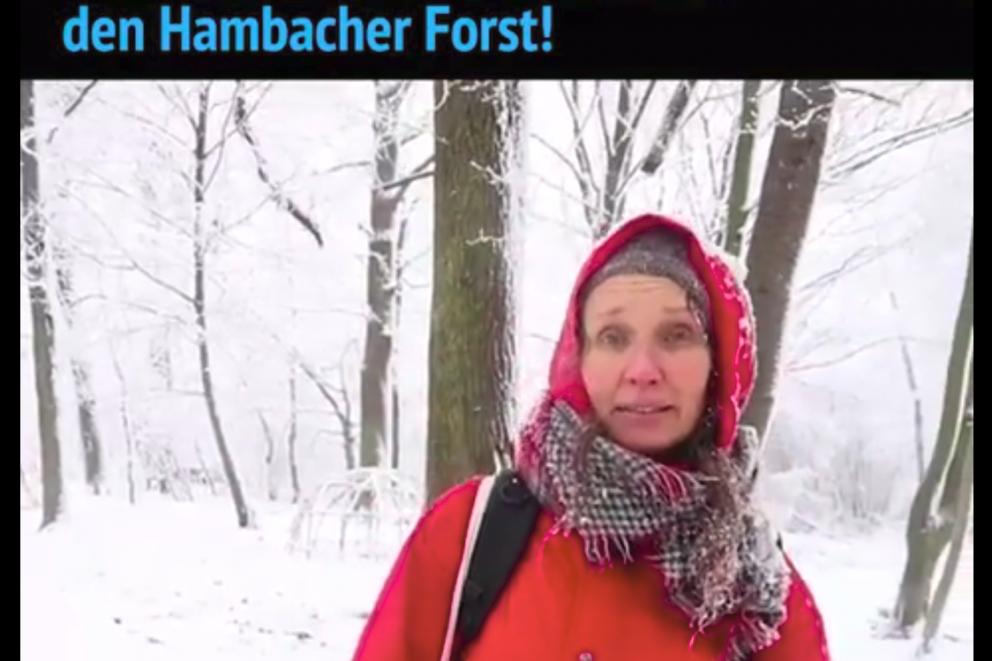 Herr Laschet, retten Sie jetzt den Hambacher Wald