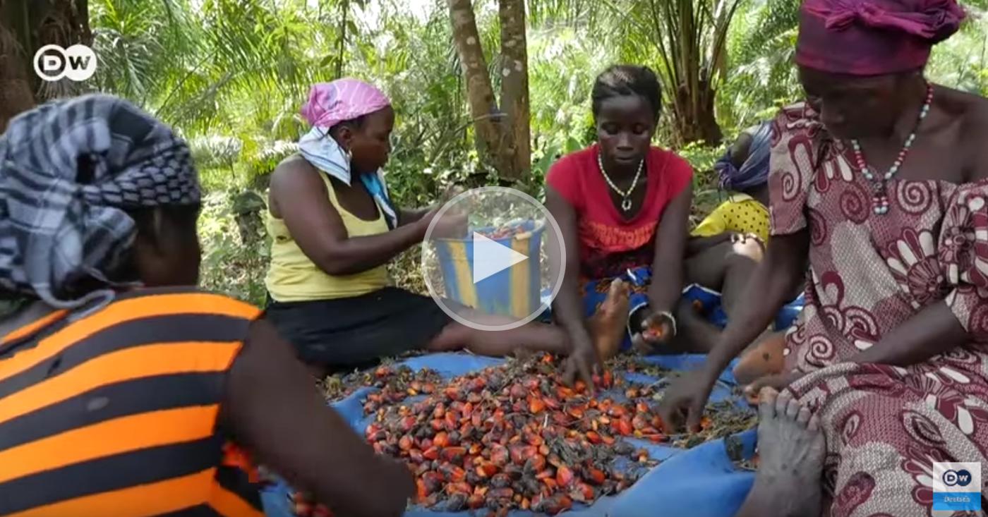 Faires Palmöl aus Sierra Leone | DW Deutsch