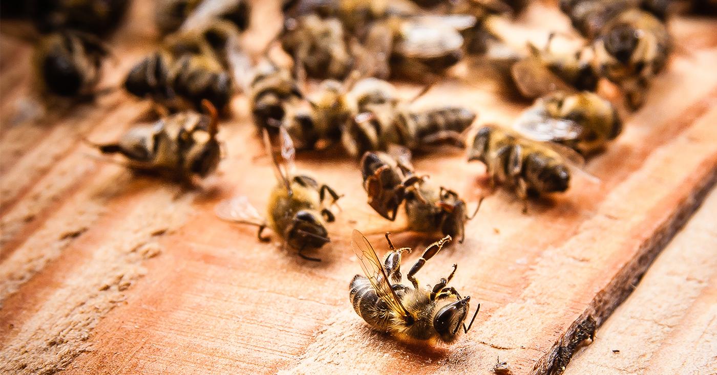 Campact Kampagnenfoto: Nicht schon wieder Bienenkiller - jetzt Campact-Appell unterzeichnen