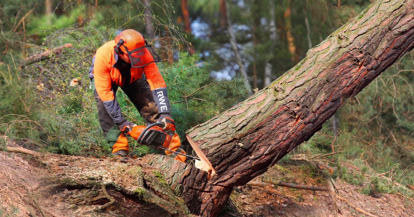 RWE: Säge weg vom Hambacher Wald! Jetzt Campact-Appell unterzeichnen