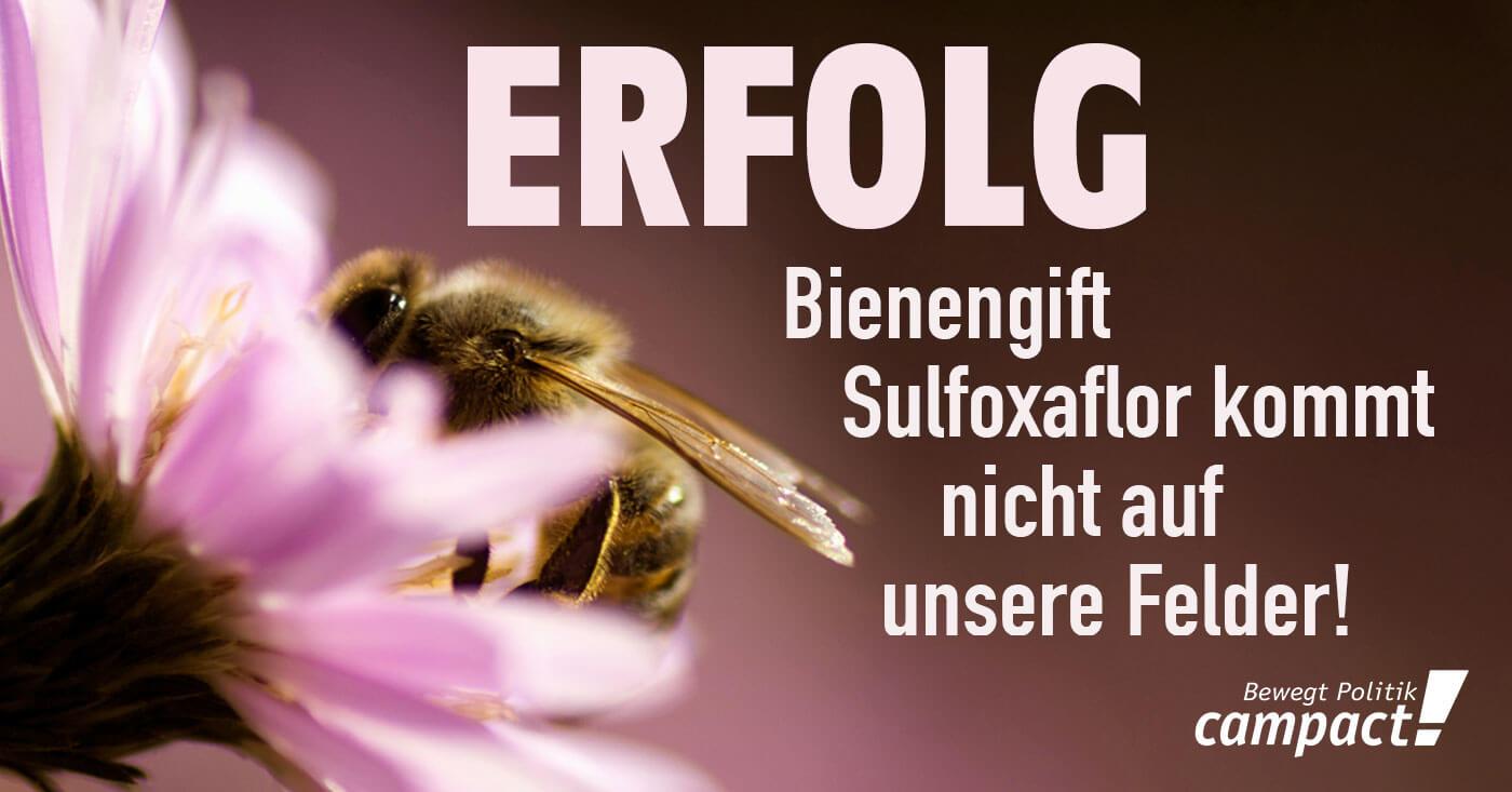 Erfolg: Bienengift Sulfoxaflor kommt nicht auf unsere Felder!