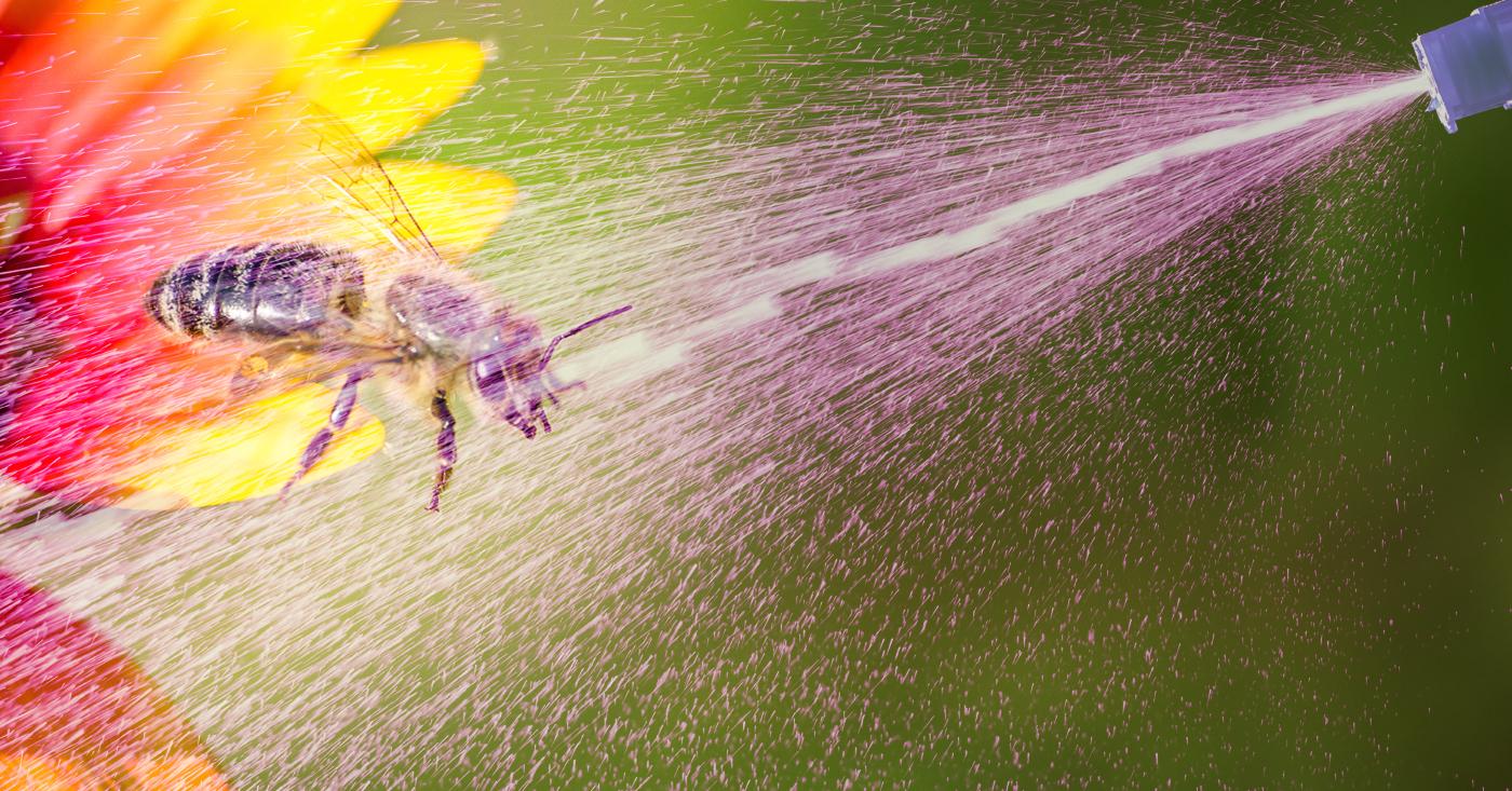 Kein Rechtsbruch für Bienengift! Campact startet einen Appell