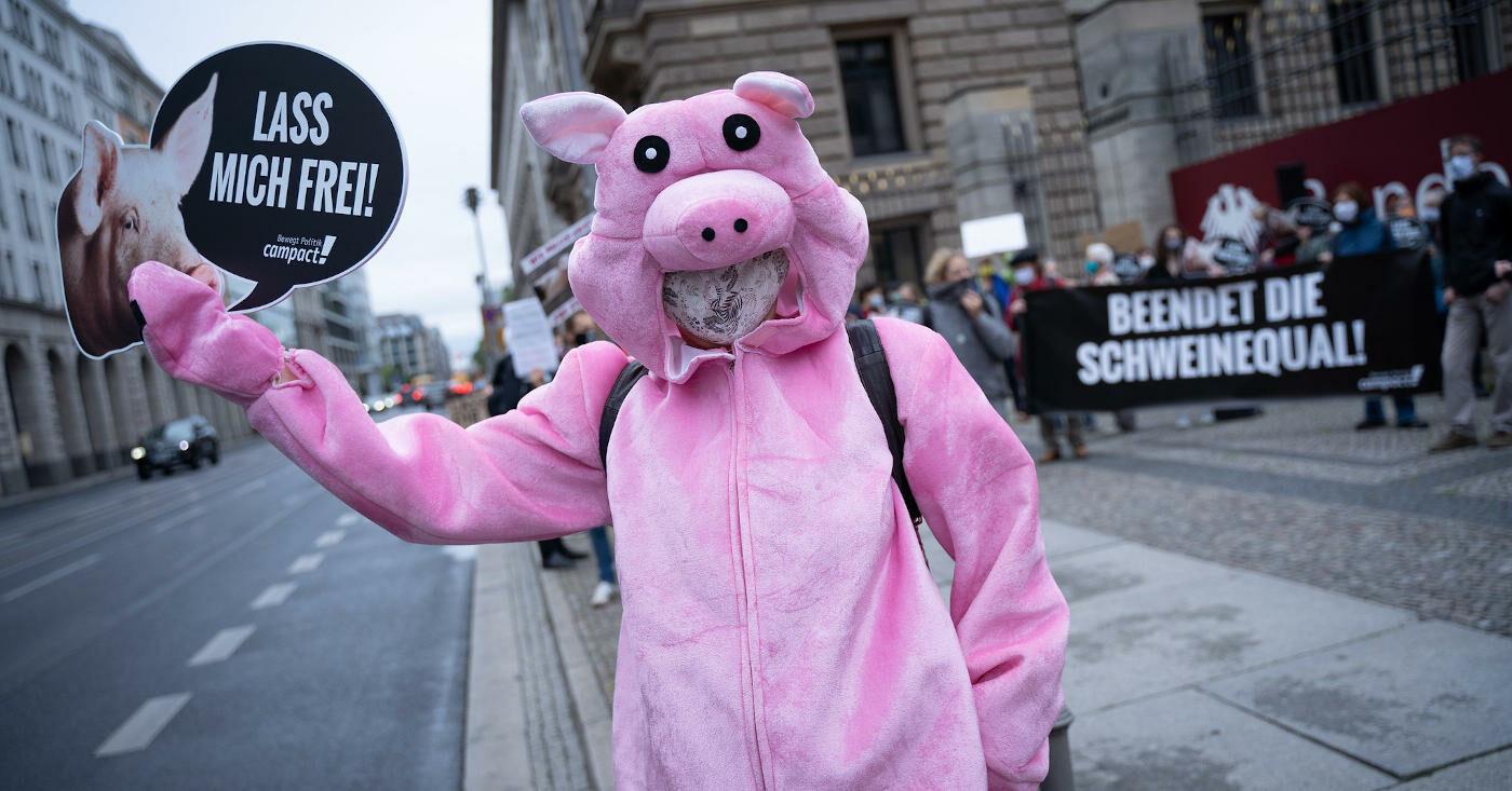 Aktivist*in im Schweinekostüm protestiert gegen den Kastenstand