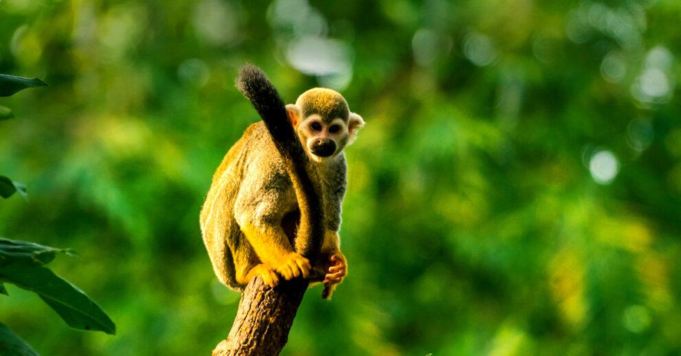 Affe sitzt auf einem Baum