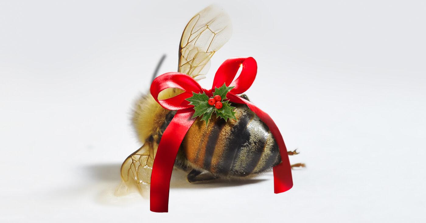 Tote Bienen mit rotem Geschenkbank: Agrarministerin Klöckner will Bienengift wieder zulassen