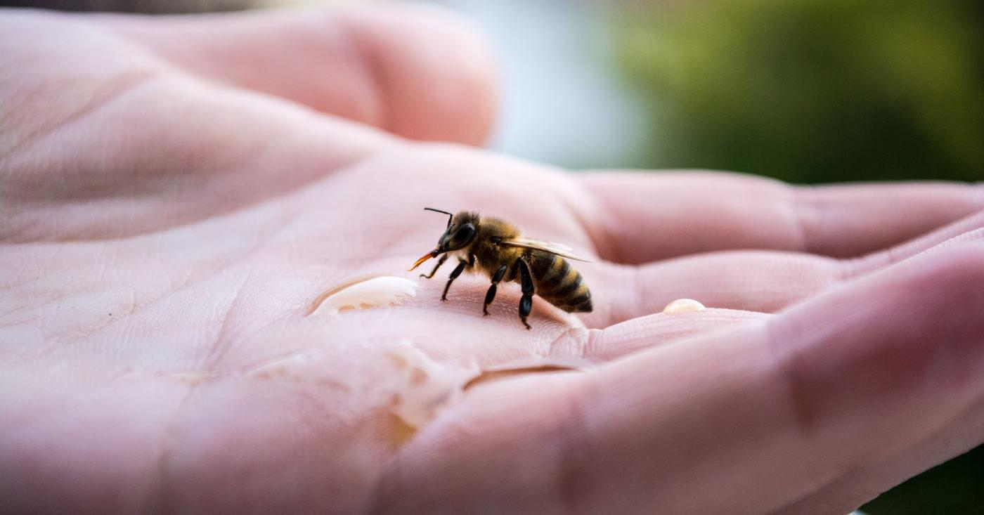 """Die Bienen brauchen Hilfe - jetzt die Europäische Bürgerinitiative """"Bienen und Bauern retten"""" unterzeichnen!"""